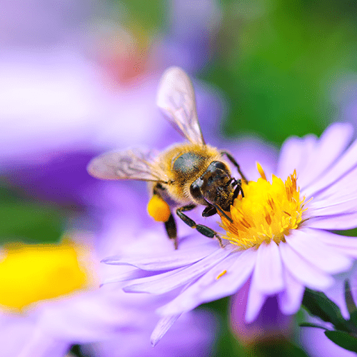 Las empresas de tecnología utilizan el monitoreo remoto para ayudar a las abejas melíferas